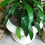 30x24 Planters - 46 pcs
